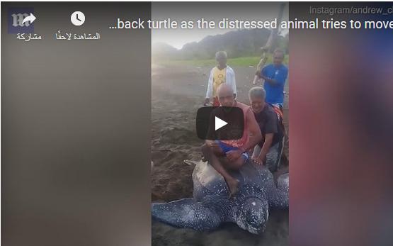 """صورة بالفيديو : إندونيسيون """"يتنقلون"""" على ظهر حيوان برمائي نادر!"""