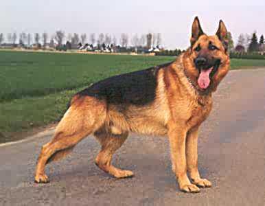 صورة أميركا توقف أرسال الكلاب للأردن